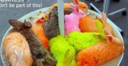 Handel mit gefärbten Tieren in Österreich, Spanien, Italien und Deutschland