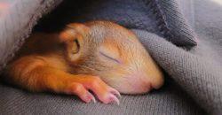 Einem Eichhörnchen das Leben gerettet