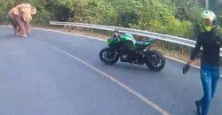 Elefant versperrt Motorradfahrern die Straße